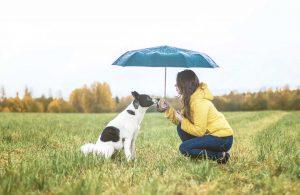 Dog trainingg at Kohlnhofer Insurance Agency